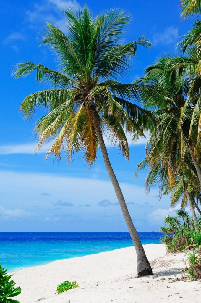 Beautiful white sand, blue sea and a palm tree are a senior travel dream come true
