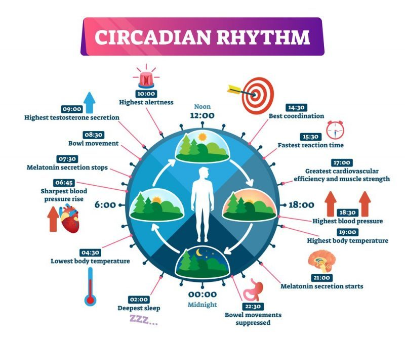 Taking account of the effect of your circadian rhythm prevents sleep deprivation