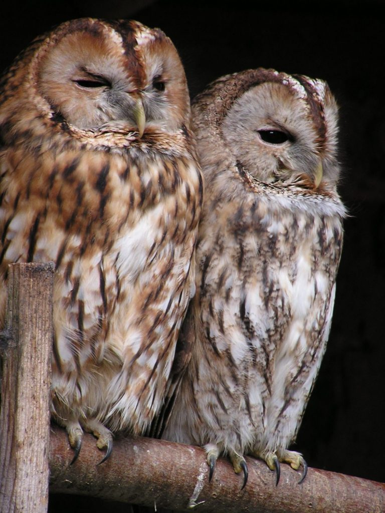 Owls are people whose genes make them more active at night than in the morning.