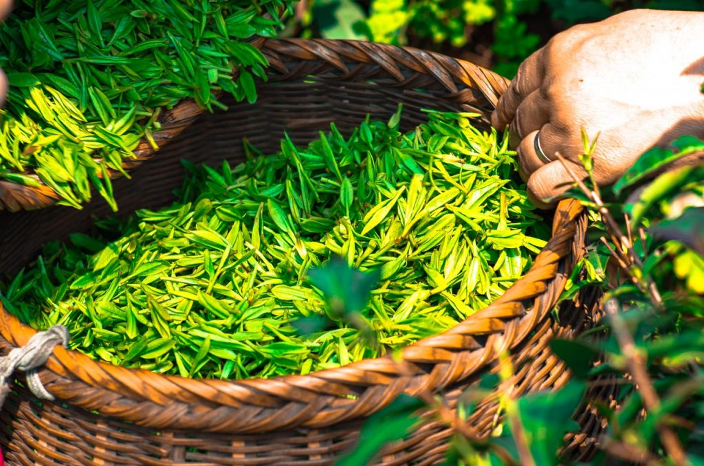 green tea has lots of phytochemicals.  They are great for your health but too  much is detrimental