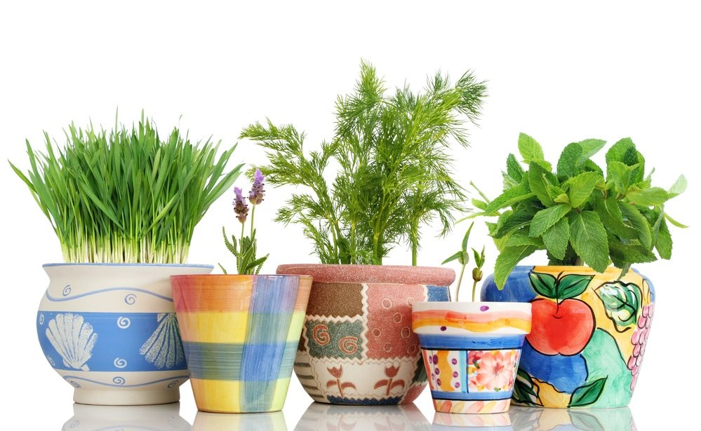 Illustrating growing herbs at home when in social isolation