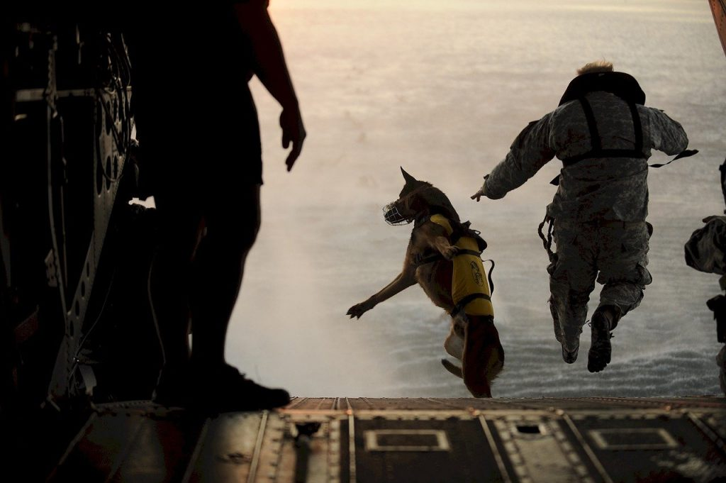 Man and dog getting a dose of  hormesis from jumping out of a plane