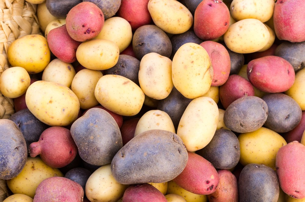 Illustrating the variety of coloured Potatoes to count in your 200 veg challenge