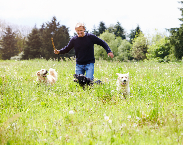 Laughing Man throwing stick for his dogs walking in field